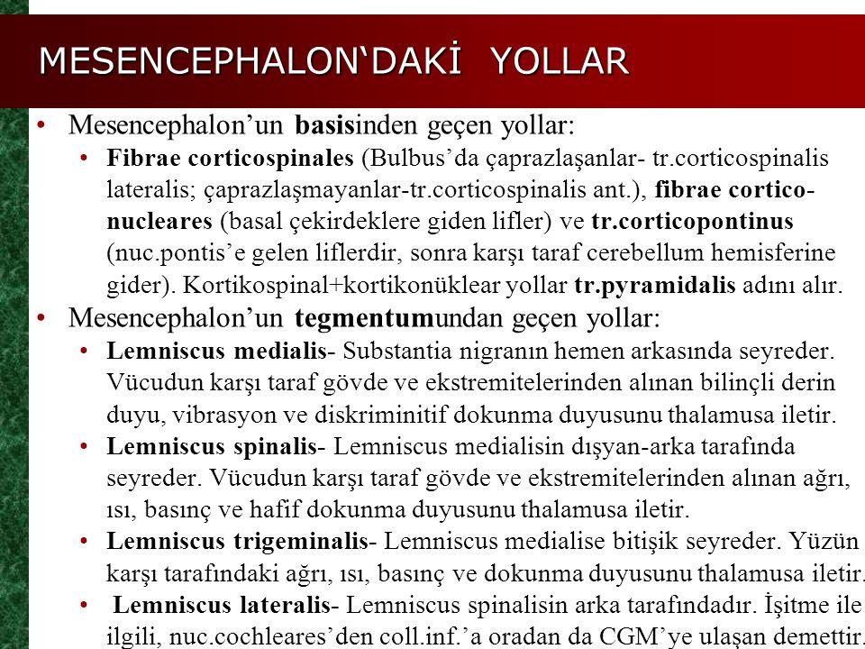MESENCEPHALON'DAKİ YOLLAR Mesencephalon'un basisinden geçen yollar: Fibrae corticospinales (Bulbus'da çaprazlaşanlar- tr.corticospinalis lateralis; ça