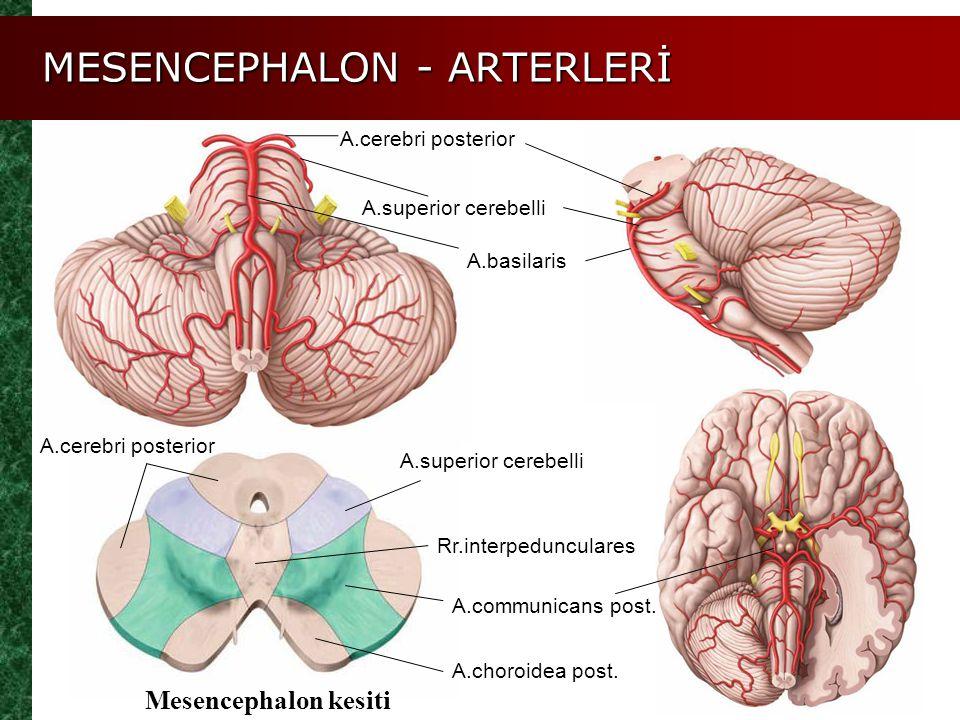 MESENCEPHALON - ARTERLERİ A.cerebri posterior A.superior cerebelli A.communicans post. A.choroidea post. A.basilaris Mesencephalon kesiti A.superior c