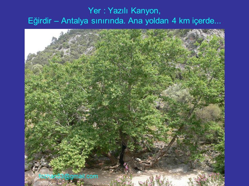 Yer : Yazılı Kanyon, Eğirdir – Antalya sınırında. Ana yoldan 4 km içerde... fozhan53@gmail.com