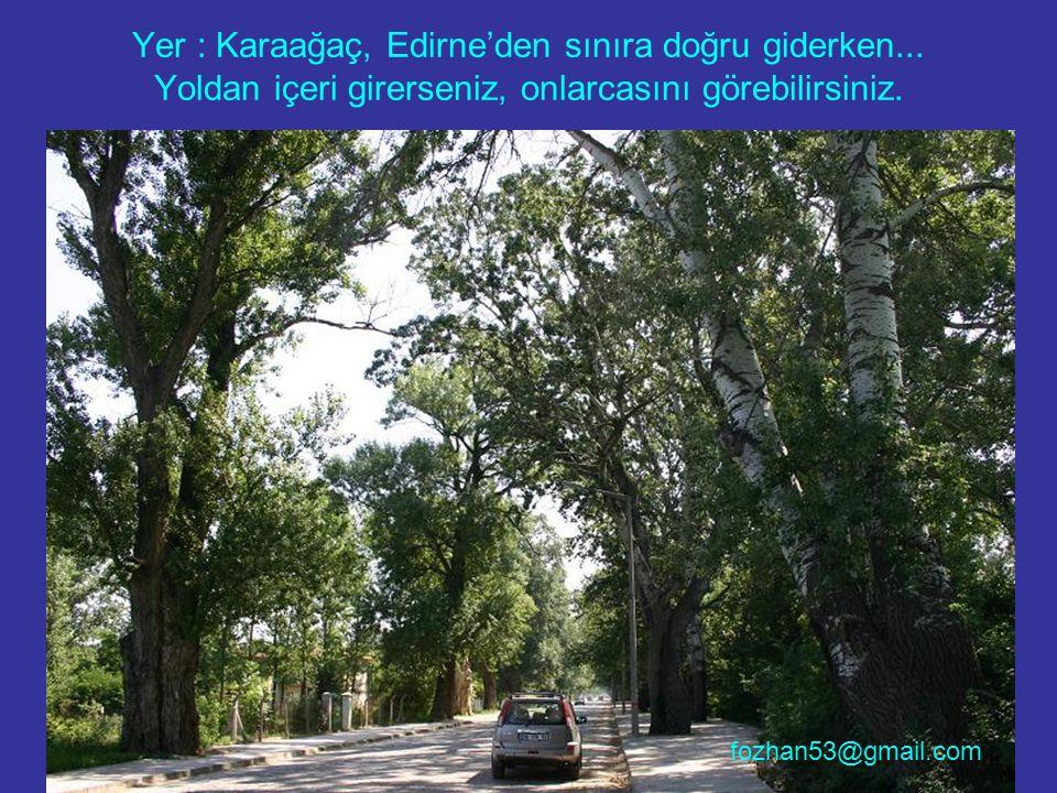 Yer : Karaağaç, Edirne'den sınıra doğru giderken... Yoldan içeri girerseniz, onlarcasını görebilirsiniz. fozhan53@gmail.com
