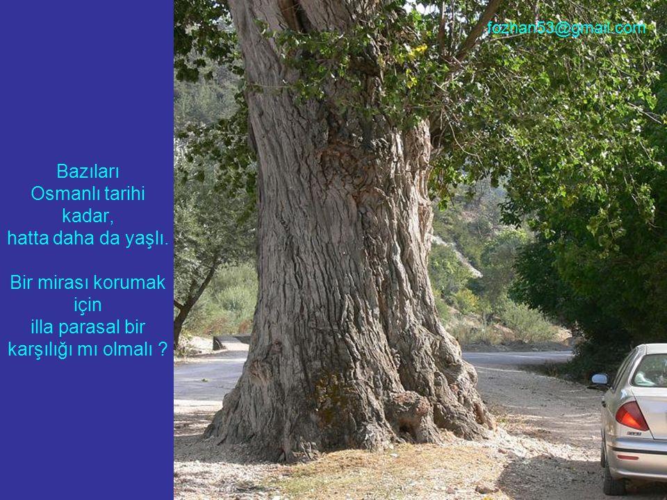 Bazıları Osmanlı tarihi kadar, hatta daha da yaşlı. Bir mirası korumak için illa parasal bir karşılığı mı olmalı ? fozhan53@gmail.com