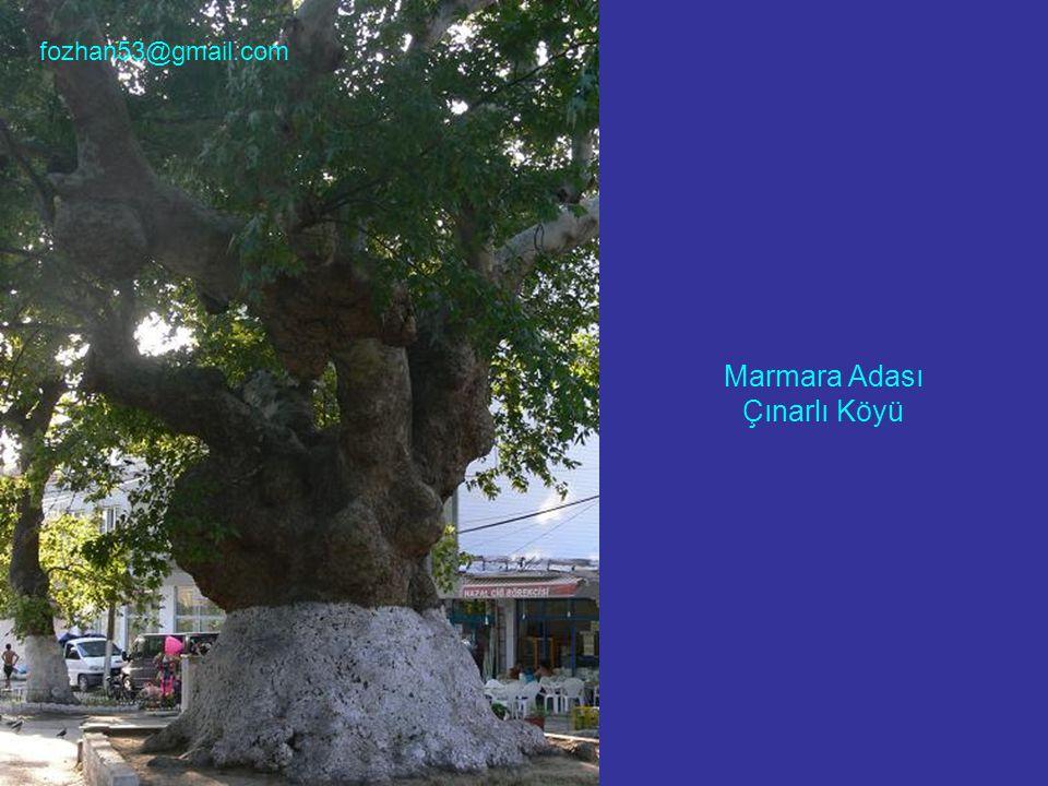 Marmara Adası Çınarlı Köyü fozhan53@gmail.com