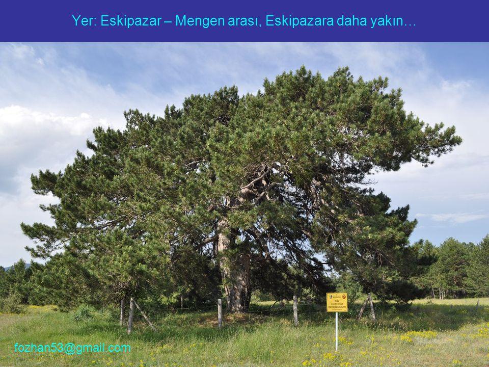 Yer: Eskipazar – Mengen arası, Eskipazara daha yakın… fozhan53@gmail.com