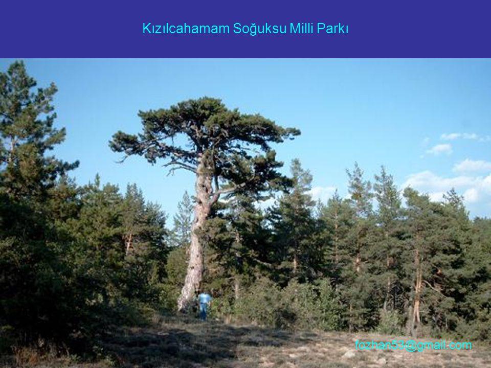 Kızılcahamam Soğuksu Milli Parkı fozhan53@gmail.com