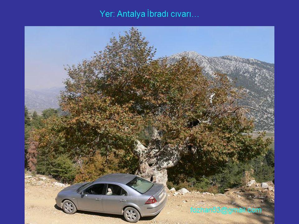 Yer: Antalya İbradı cıvarı… fozhan53@gmail.com