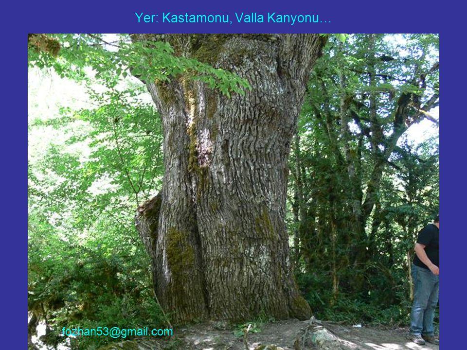 Yer: Kastamonu, Valla Kanyonu… fozhan53@gmail.com