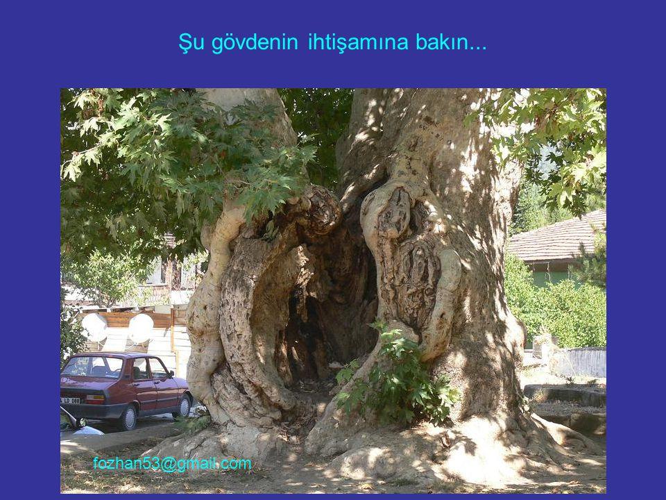 Yer: Isparta Sagalassos antik kentinin yanında Ağlasun merkezi… fozhan53@gmail.com