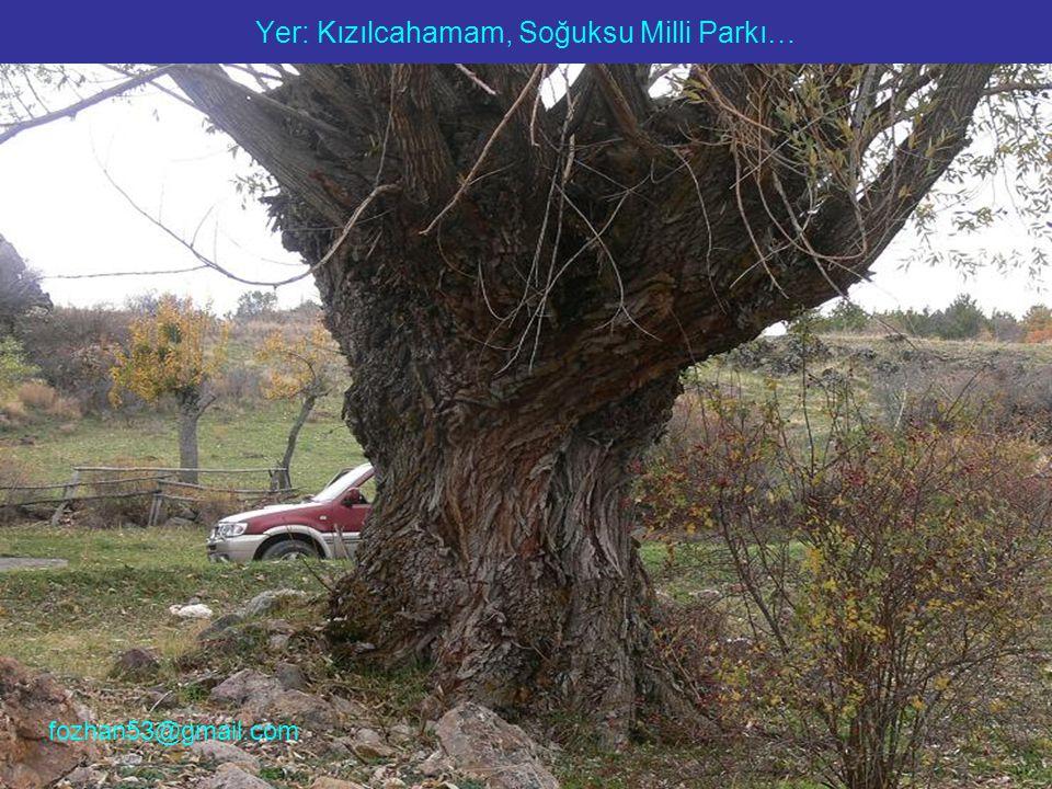 Yer: Kızılcahamam, Soğuksu Milli Parkı… fozhan53@gmail.com