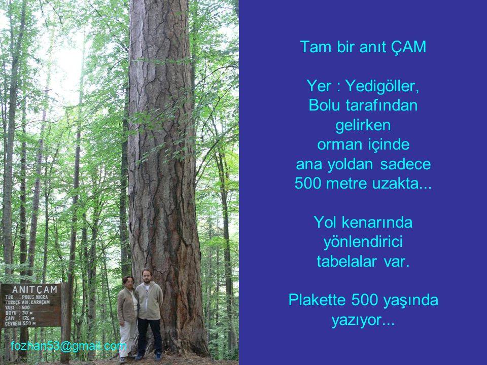 Yine müthiş bir ÇINAR Yer : Akşehir, Konya ilimizin ucunda, Hıdırlık tepesinde...