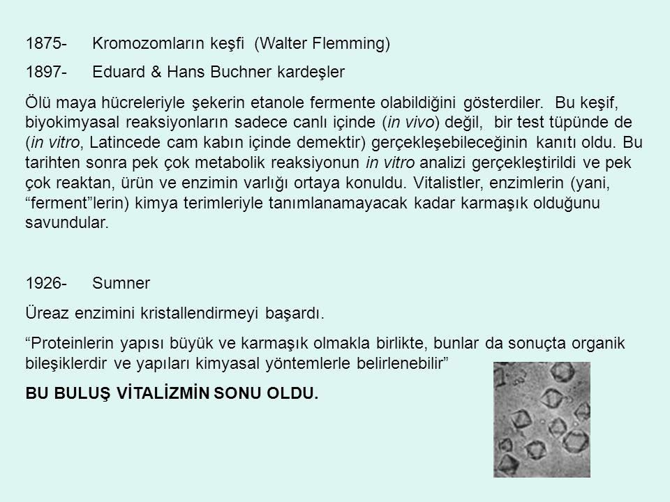 1897-Eduard & Hans Buchner kardeşler Ölü maya hücreleriyle şekerin etanole fermente olabildiğini gösterdiler. Bu keşif, biyokimyasal reaksiyonların sa