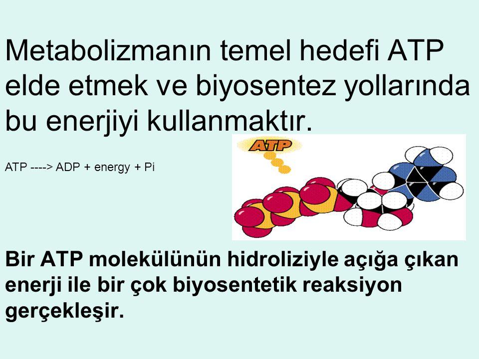 Metabolizmanın temel hedefi ATP elde etmek ve biyosentez yollarında bu enerjiyi kullanmaktır. Bir ATP molekülünün hidroliziyle açığa çıkan enerji ile