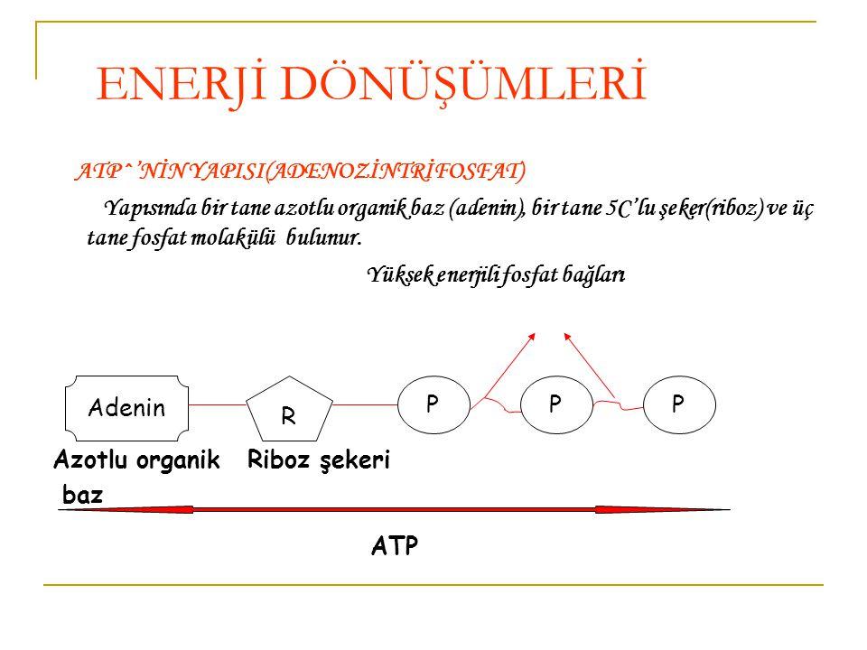 ATP^'NİN YAPISI(ADENOZİNTRİFOSFAT) Yapısında bir tane azotlu organik baz (adenin), bir tane 5C'lu şeker(riboz) ve üç tane fosfat molakülü bulunur.