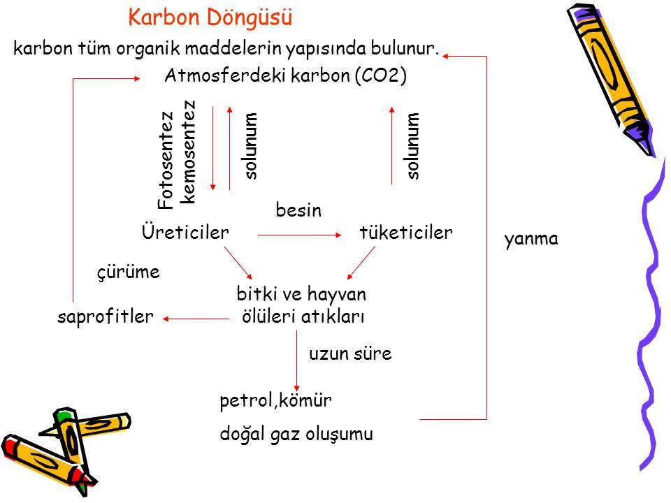 Karbon Döngüsü karbon tüm organik maddelerin yapısında bulunur.