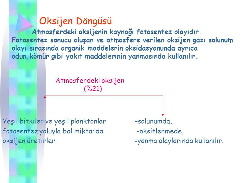 Oksijen Döngüsü Atmosferdeki oksijenin kaynağı fotosentez olayıdır.