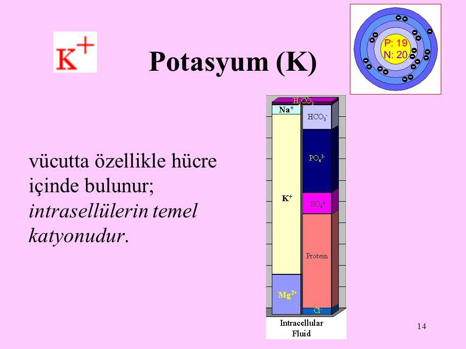 14 Potasyum (K) vücutta özellikle hücre içinde bulunur; intrasellülerin temel katyonudur.