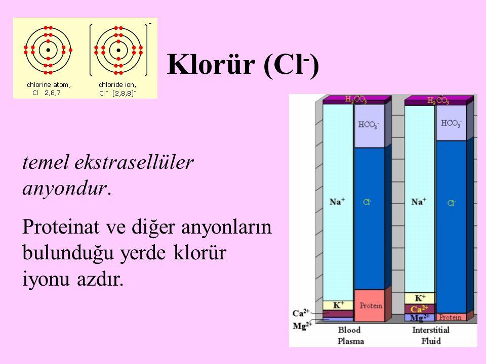 18 Klorür (Cl - ) temel ekstrasellüler anyondur. Proteinat ve diğer anyonların bulunduğu yerde klorür iyonu azdır.