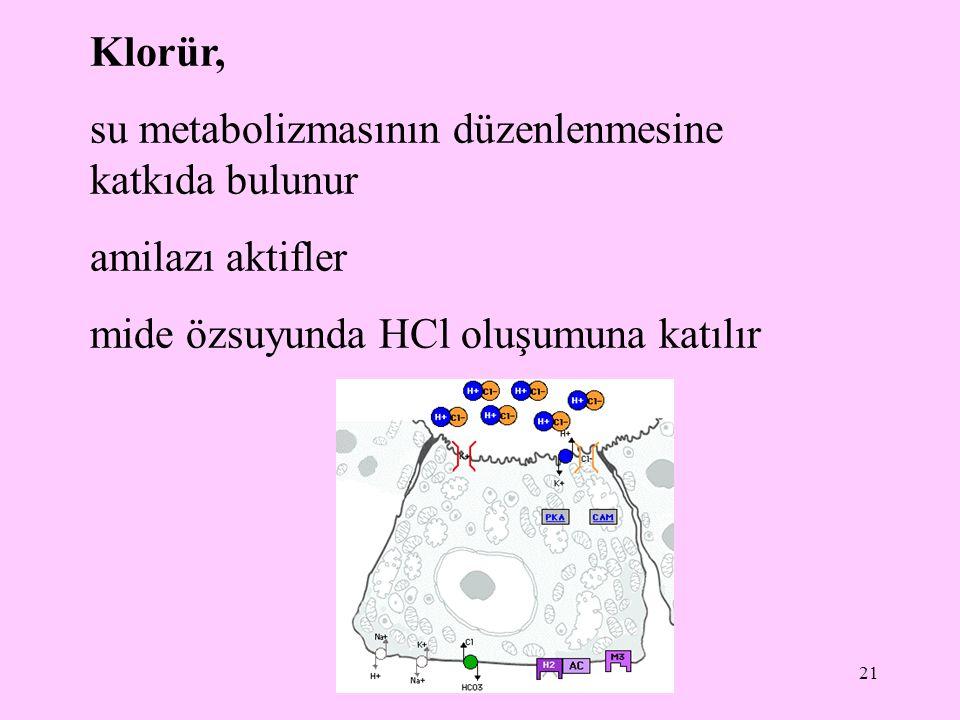 21 Klorür, su metabolizmasının düzenlenmesine katkıda bulunur amilazı aktifler mide özsuyunda HCl oluşumuna katılır