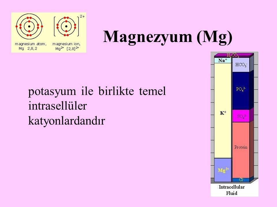 23 Magnezyum (Mg) potasyum ile birlikte temel intrasellüler katyonlardandır