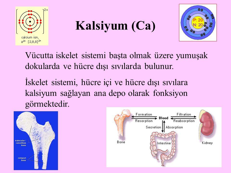 27 Kalsiyum (Ca) Vücutta iskelet sistemi başta olmak üzere yumuşak dokularda ve hücre dışı sıvılarda bulunur. İskelet sistemi, hücre içi ve hücre dışı
