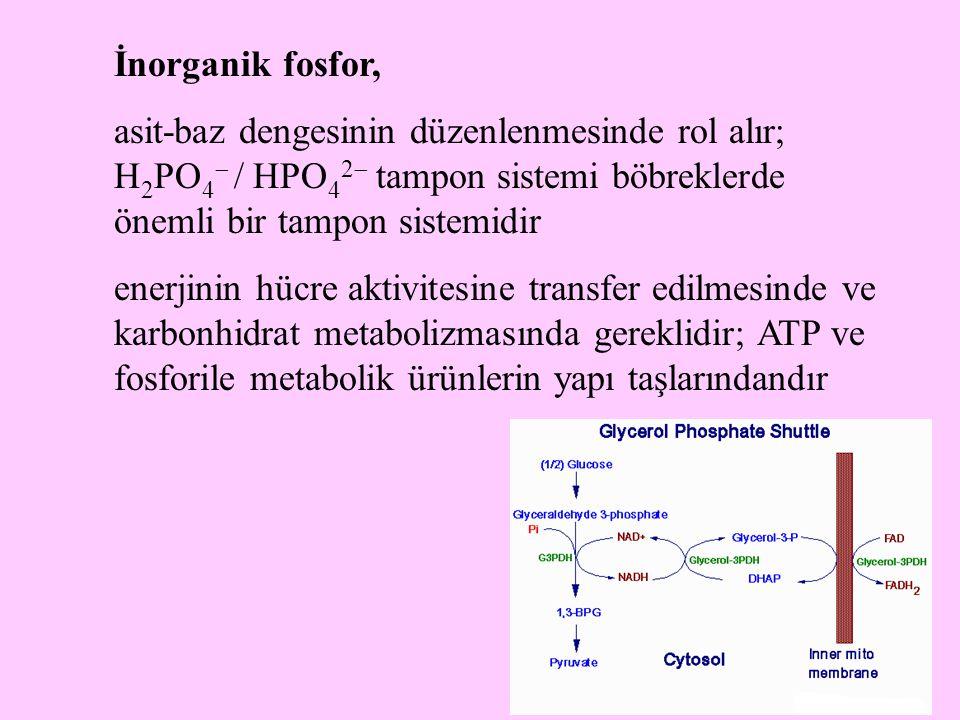 35 İnorganik fosfor, asit-baz dengesinin düzenlenmesinde rol alır; H 2 PO 4  / HPO 4 2  tampon sistemi böbreklerde önemli bir tampon sistemidir ener