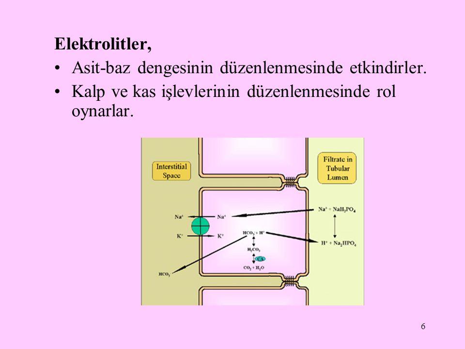 6 Elektrolitler, Asit-baz dengesinin düzenlenmesinde etkindirler. Kalp ve kas işlevlerinin düzenlenmesinde rol oynarlar.