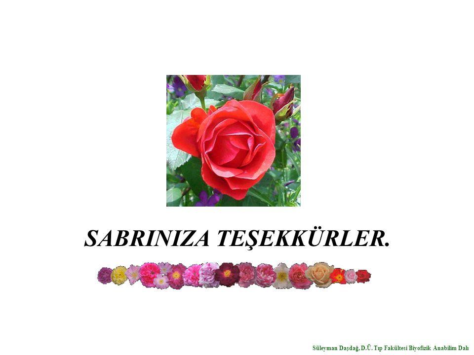 SABRINIZA TEŞEKKÜRLER. Süleyman Daşdağ, D.Ü. Tıp Fakültesi Biyofizik Anabilim Dalı