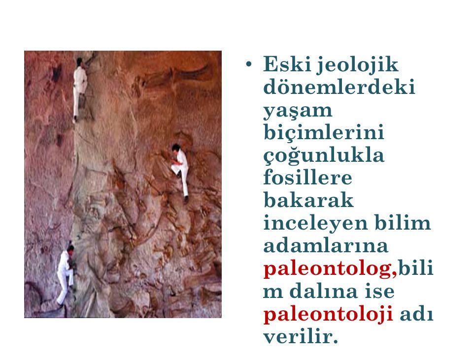 Eski jeolojik dönemlerdeki yaşam biçimlerini çoğunlukla fosillere bakarak inceleyen bilim adamlarına paleontolog,bili m dalına ise paleontoloji adı ve