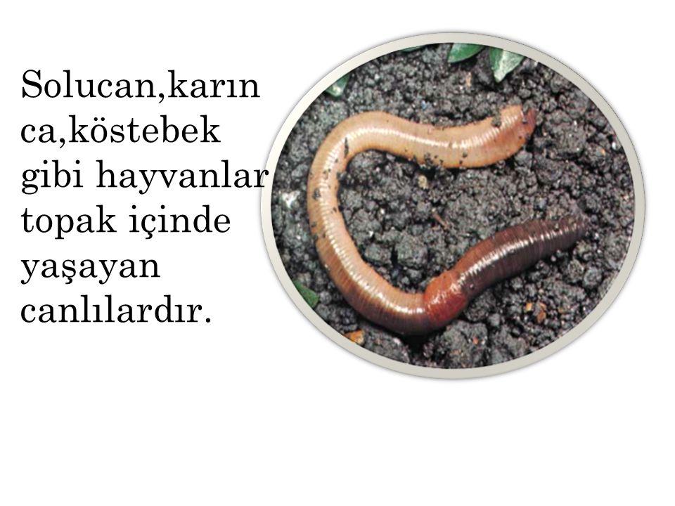 Solucan,karın ca,köstebek gibi hayvanlar topak içinde yaşayan canlılardır.