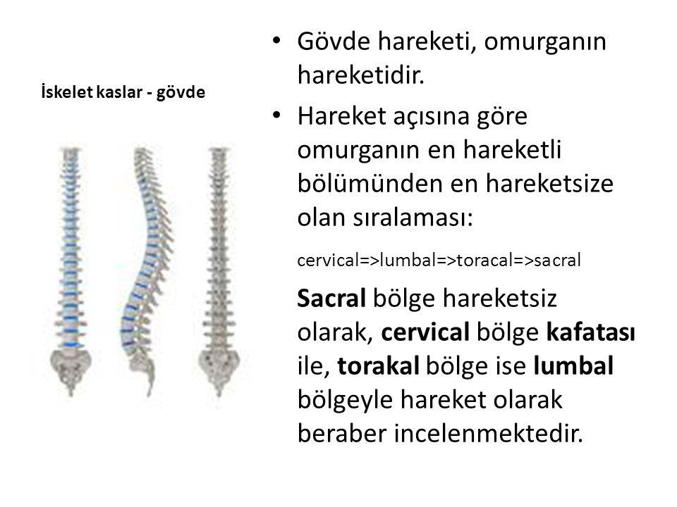 İskelet kaslar - gövde Cervical açılar Boyun flex-45°,extans-45° Boyun lateral flex.-45 Boyun rotasyon – 60° Lumbal açılar Bel flex.-80°, ekstans.-25° Bel rotasyon - 45°