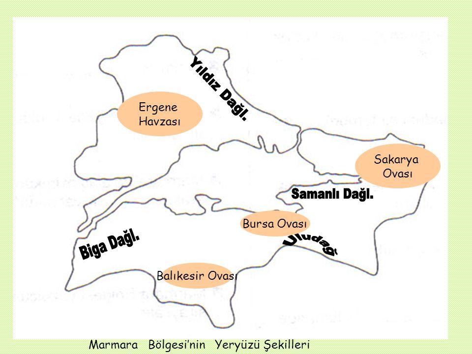 Ergene Havzası Sakarya Ovası Bursa Ovası Balıkesir Ovası Marmara Bölgesi'nin Yeryüzü Şekilleri