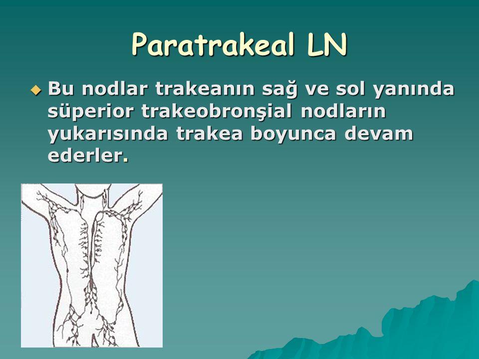 Paratrakeal LN  Bu nodlar trakeanın sağ ve sol yanında süperior trakeobronşial nodların yukarısında trakea boyunca devam ederler.