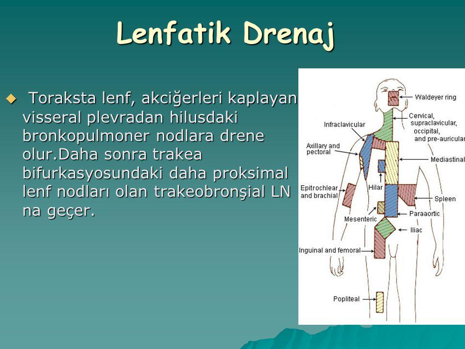  Toraksta lenf, akciğerleri kaplayan visseral plevradan hilusdaki bronkopulmoner nodlara drene olur.Daha sonra trakea bifurkasyosundaki daha proksima