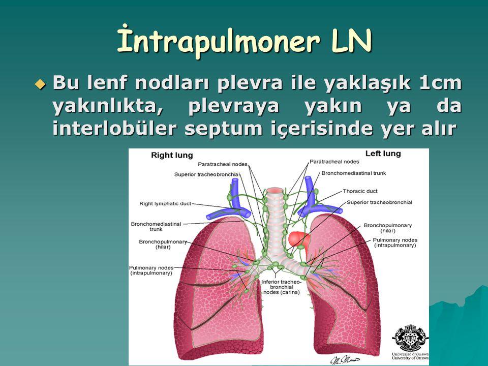 İntrapulmoner LN  Bu lenf nodları plevra ile yaklaşık 1cm yakınlıkta, plevraya yakın ya da interlobüler septum içerisinde yer alır
