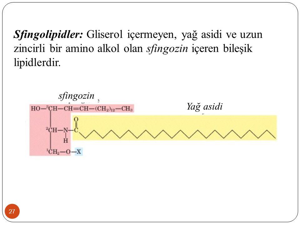 27 Sfingolipidler: Gliserol içermeyen, yağ asidi ve uzun zincirli bir amino alkol olan sfingozin içeren bileşik lipidlerdir. sfingozin Yağ asidi