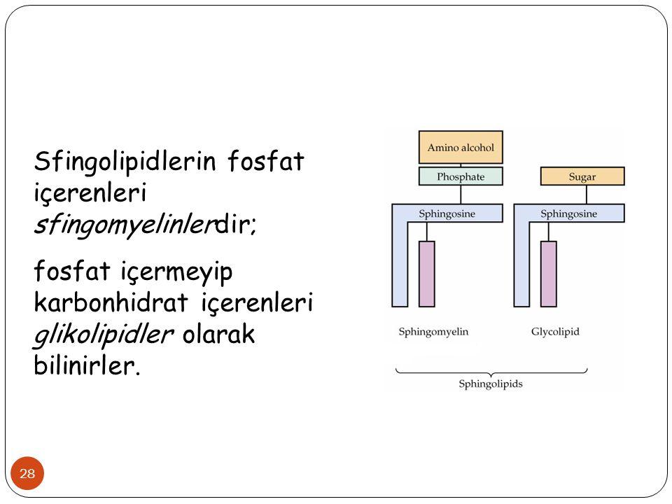 28 Sfingolipidlerin fosfat içerenleri sfingomyelinlerdir; fosfat içermeyip karbonhidrat içerenleri glikolipidler olarak bilinirler.