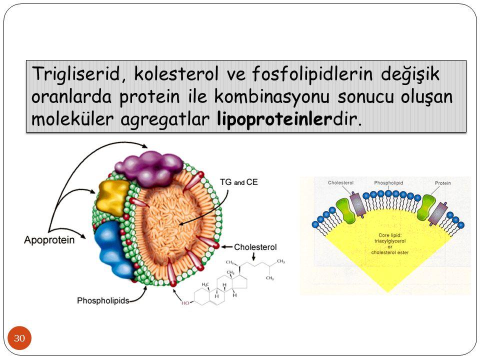 30 Trigliserid, kolesterol ve fosfolipidlerin değişik oranlarda protein ile kombinasyonu sonucu oluşan moleküler agregatlar lipoproteinlerdir.