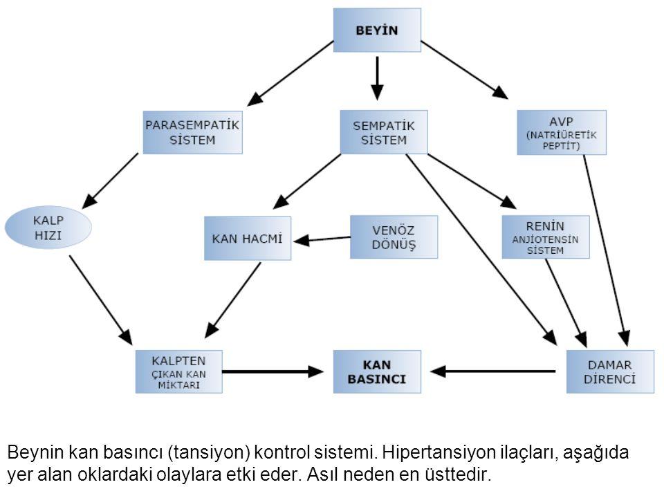 Beynin kan basıncı (tansiyon) kontrol sistemi. Hipertansiyon ilaçları, aşağıda yer alan oklardaki olaylara etki eder. Asıl neden en üsttedir.