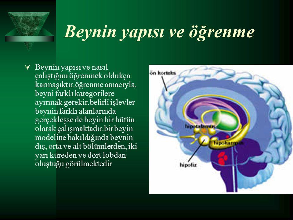 Beynin yapısı ve öğrenme  Beynin yapısı ve nasıl çalıştığını öğrenmek oldukça karmaşıktır.öğrenme amacıyla, beyni farklı kategorilere ayırmak gerekir.belirli işlevler beynin farklı alanlarında gerçekleşse de beyin bir bütün olarak çalışmaktadır.bir beyin modeline bakıldığında beynin dış, orta ve alt bölümlerden, iki yarı küreden ve dört lobdan oluştuğu görülmektedir