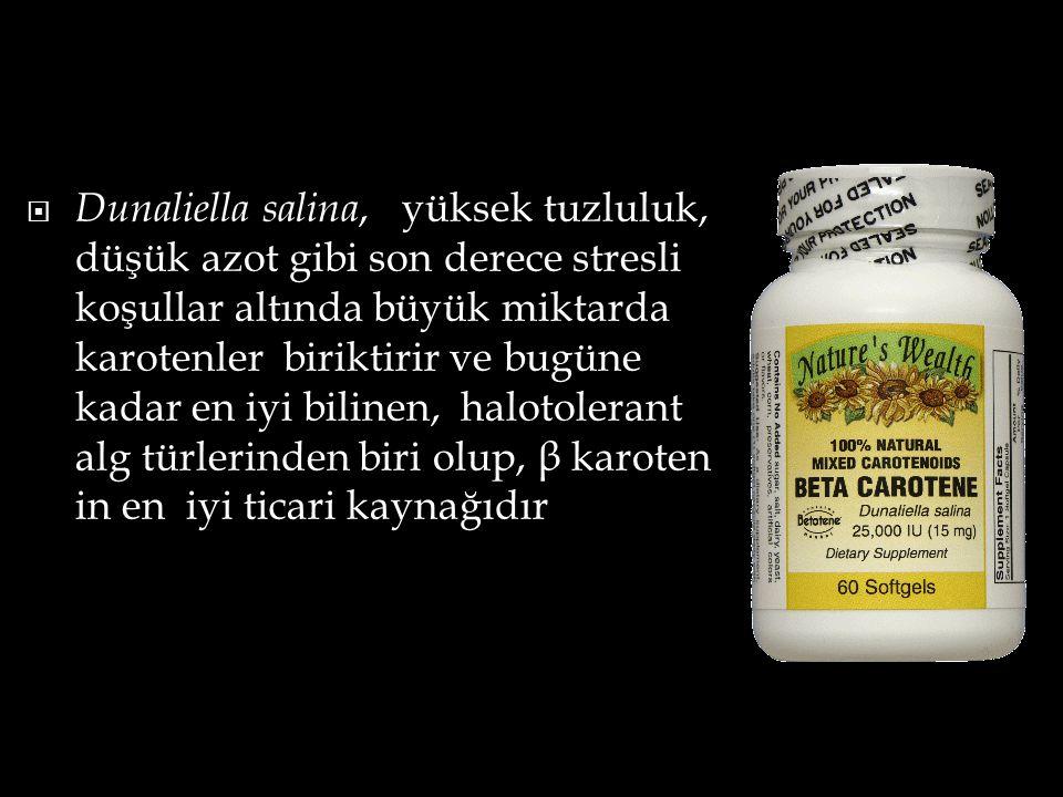  Dunaliella salina, yüksek tuzluluk, düşük azot gibi son derece stresli koşullar altında büyük miktarda karotenler biriktirir ve bugüne kadar en iyi