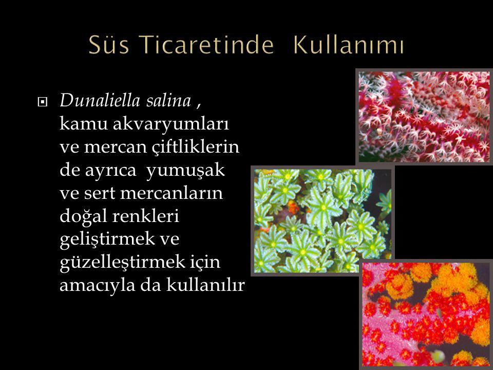 Dunaliella salina, kamu akvaryumları ve mercan çiftliklerin de ayrıca yumuşak ve sert mercanların doğal renkleri geliştirmek ve güzelleştirmek için