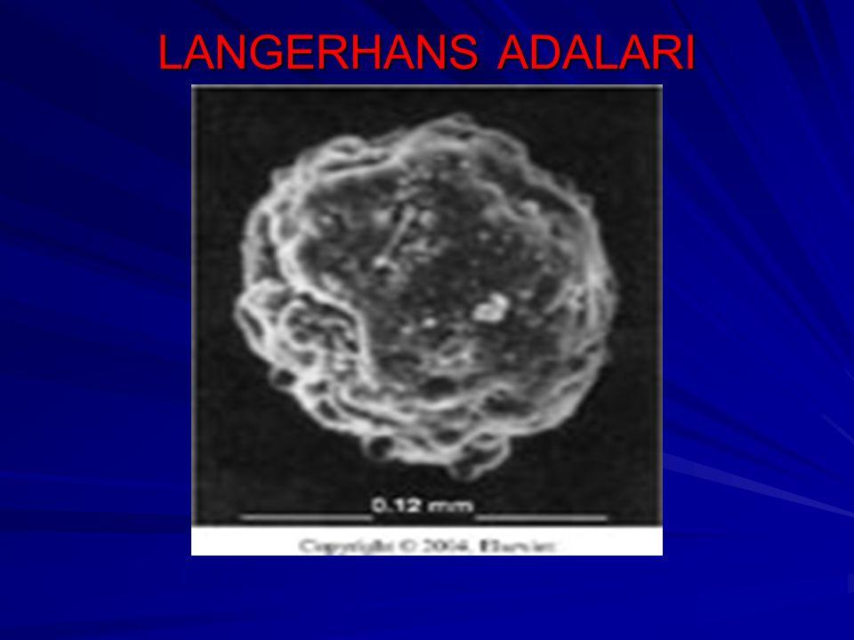 LANGERHANS ADALARI