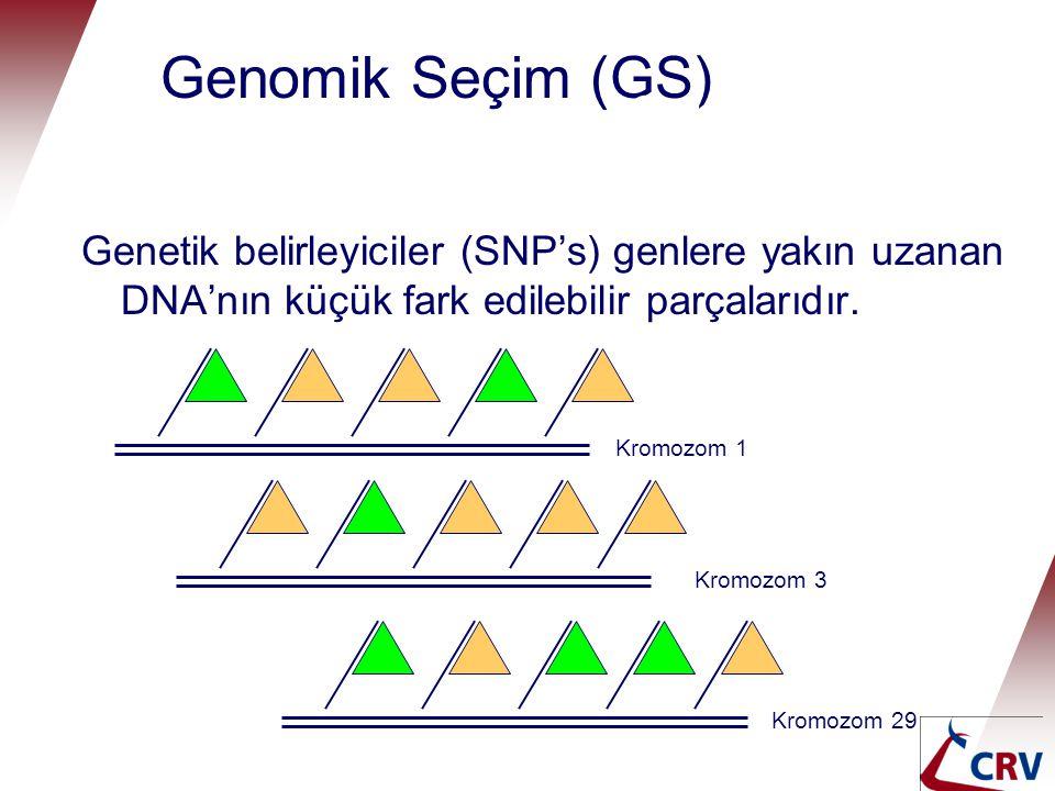 Genomik Seçim (GS) Genetik belirleyiciler (SNP's) genlere yakın uzanan DNA'nın küçük fark edilebilir parçalarıdır. Genomic selection Kromozom 1 Kromoz