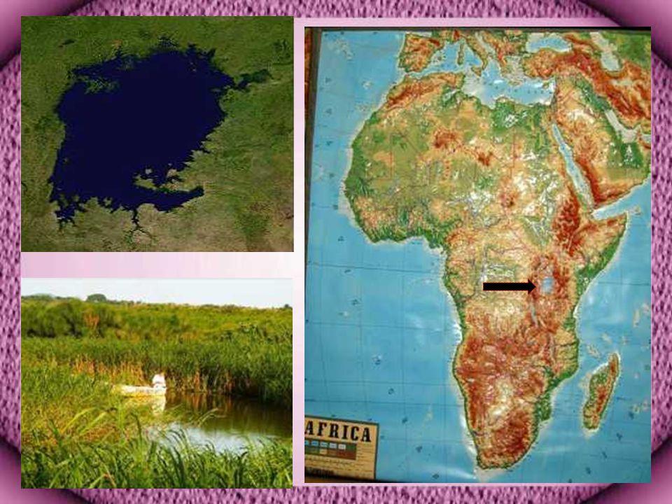 Viktorya Gölü Viktorya Gölü Afrika nın doğusunda Tanzanya, Uganda ve Kenya topraklarında bulunan Dünya nın en büyük ikinci tatlı su gölüdür.