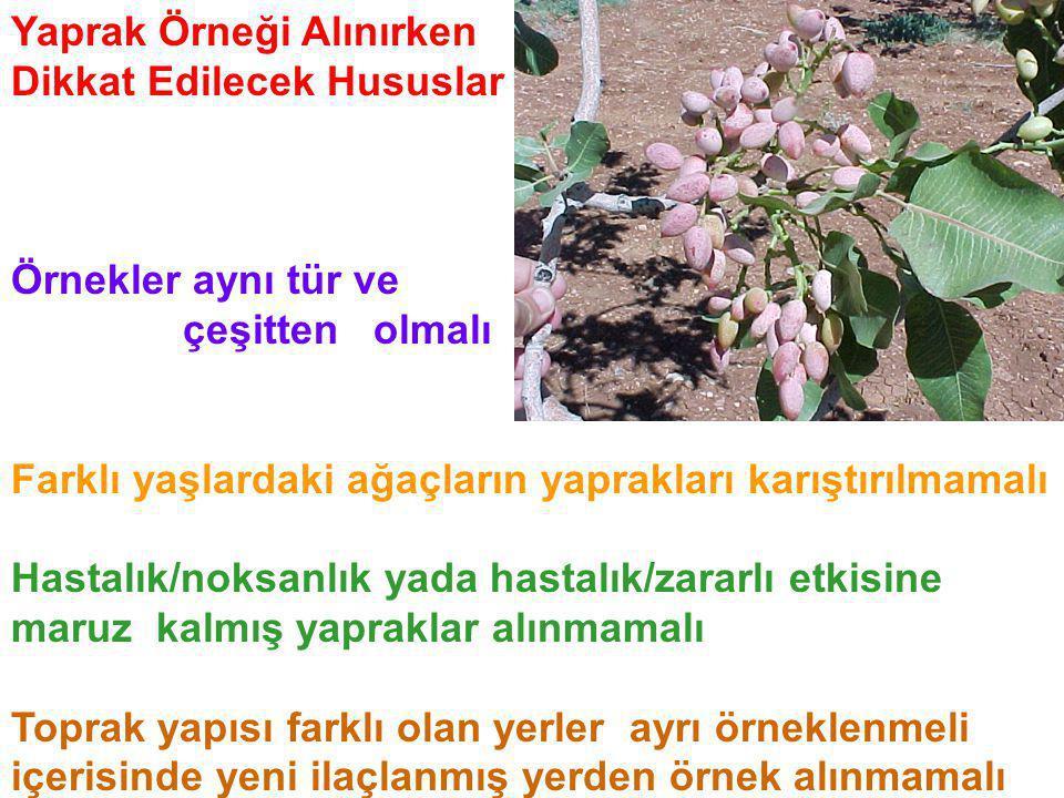 Yaprak Örneği Alınırken Dikkat Edilecek Hususlar Örnekler aynı tür ve çeşitten olmalı Farklı yaşlardaki ağaçların yaprakları karıştırılmamalı Hastalık