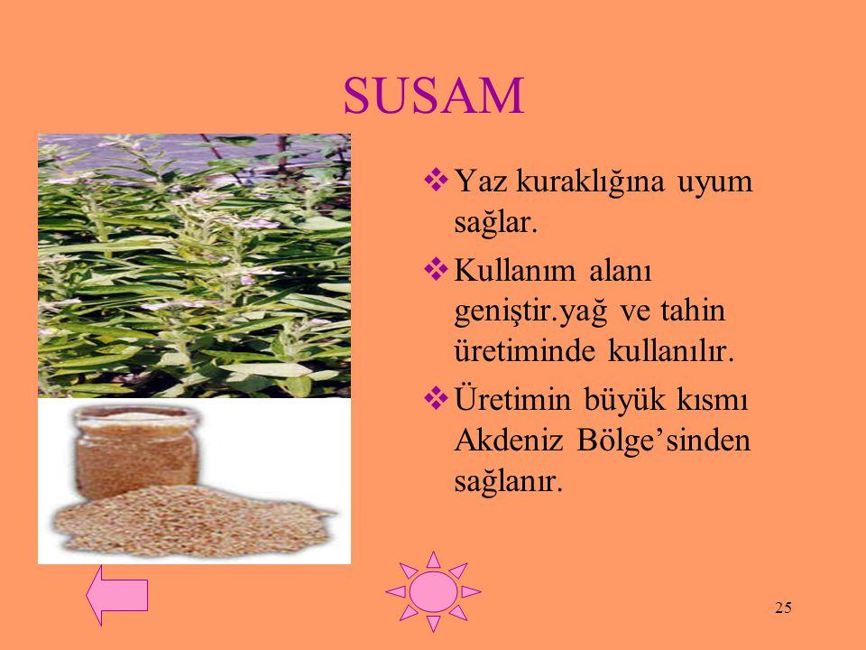 24 HAŞHAŞ  Doğal yetişme alanı geniştir.fakat uyuşturucu yapımında da kullanıldığı için üretimi devlet denetimi ile sınırlandırılmıştır.