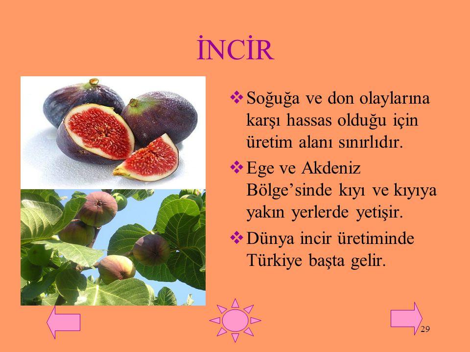 28 ÜZÜM  Ülkemizde en çok ve en yaygın üretilen meyvedir.