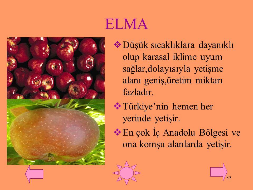 32 MUZ  Ülkemizde kış sıcaklıklarına karşı en duyarlı meyvedir.