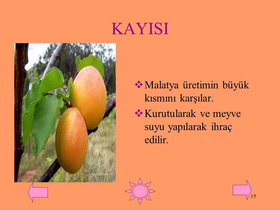 34 ŞEFTALİ  Bursa ve İzmir'de yoğun olarak yetiştirilir.