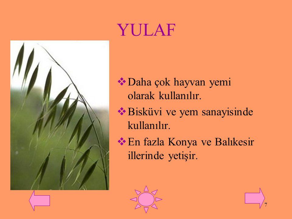 6 ÇAVDAR  Buğday,arpa ve yulafın yetişemediği karasal ve kıraç alanlarda yetişebilir.