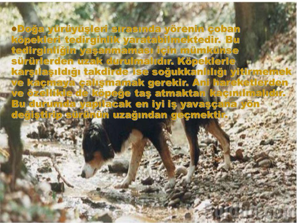 Doğa yürüyüşleri sırasında yörenin çoban köpekleri tedirginlik yaratabilmektedir. Bu tedirginliğin yaşanmaması için mümkünse sürürlerden uzak durulmal